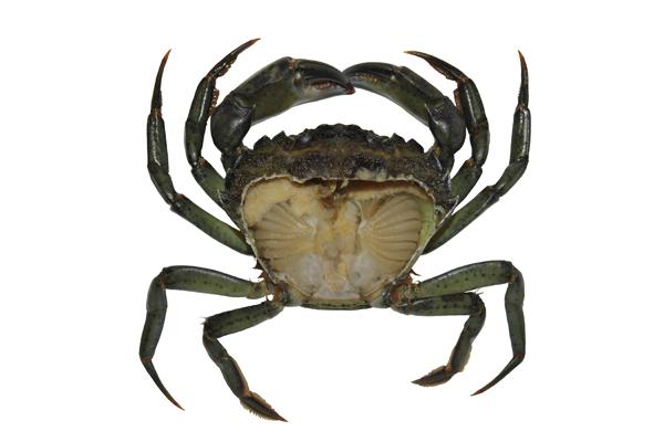 MNA Marine Biology Prac Crab1