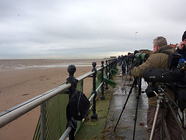 01 Hoylake massed birders