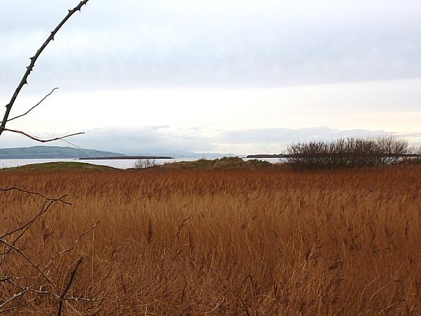 01 Hoylake reeds at Red Rocks