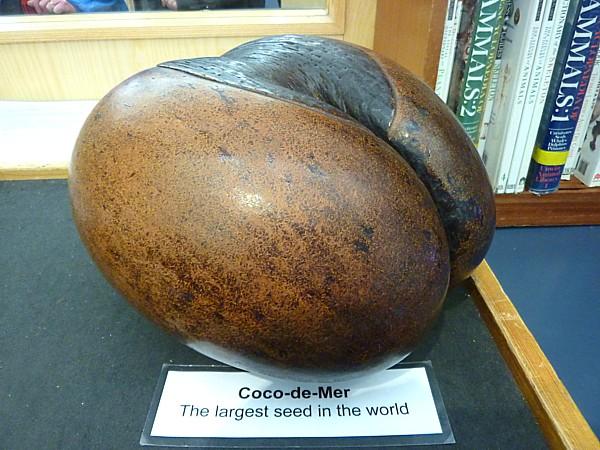 03 Museum Coco de Mer seed
