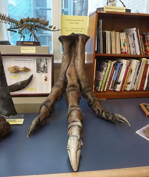 03 Museum T rex foot