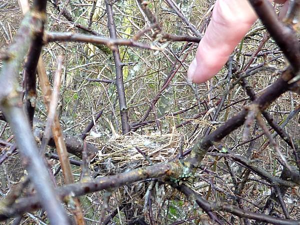 04 Old Quay nest