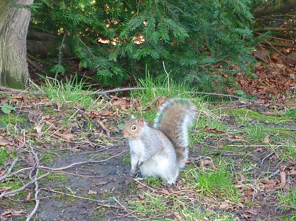 05 Birkenhead Park squirrel