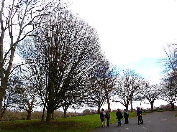 08 Sefton explosion tree