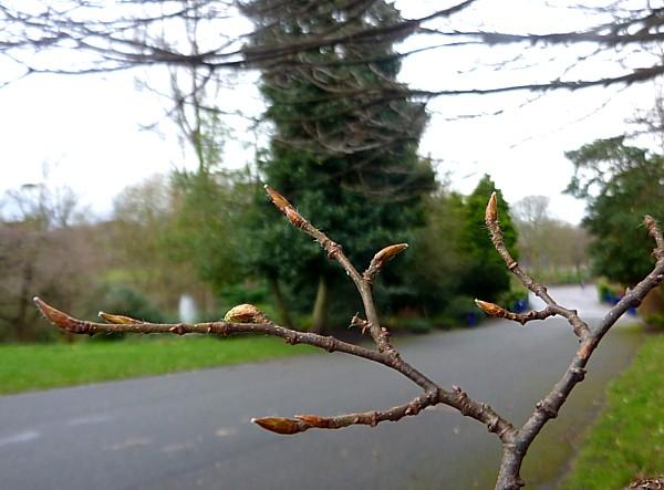 08 Sefton explosion twigs