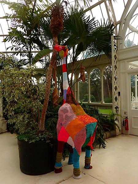 08 Sefton giraffe