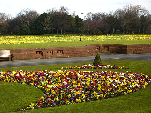14 Stanley beds and daffs