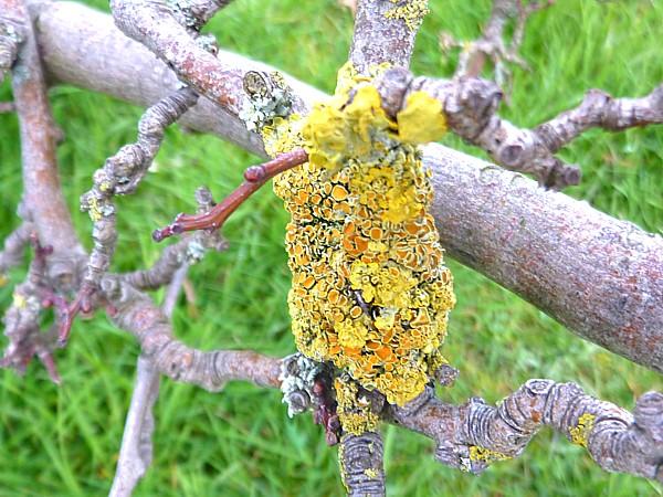 14 Stanley lichen