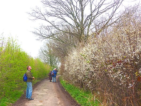 15 Thornton Blackthorn lane