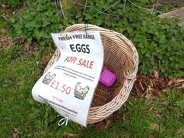 15 Thornton eggs