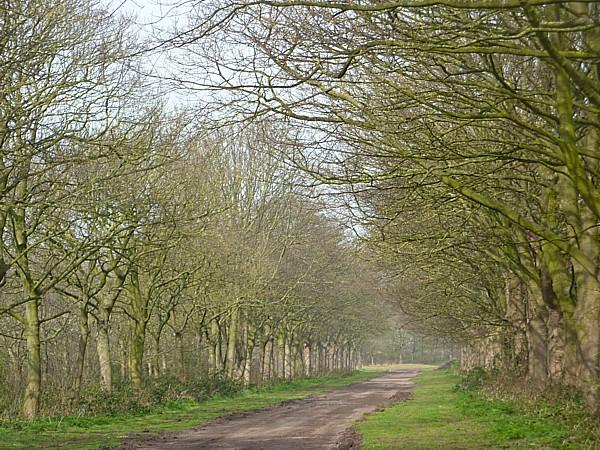 15 Thornton tree-lined lane