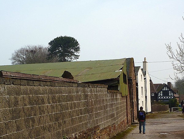 15 Thornton trees over barn roof