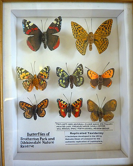 16 Dibbinsdale rep tax butterflies