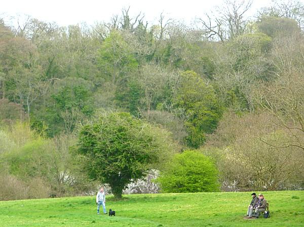 16 Dibbinsdale trees awakening