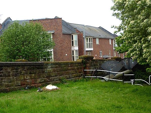 18 Chester Swan nest
