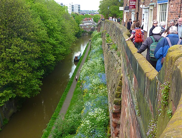18 Chester flowers on canal verge