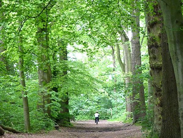 21 Arrowe woodland path