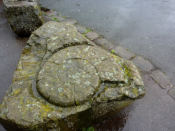 23 Cronton ammonite