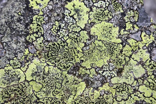 MNA Cilcain Map Lichen