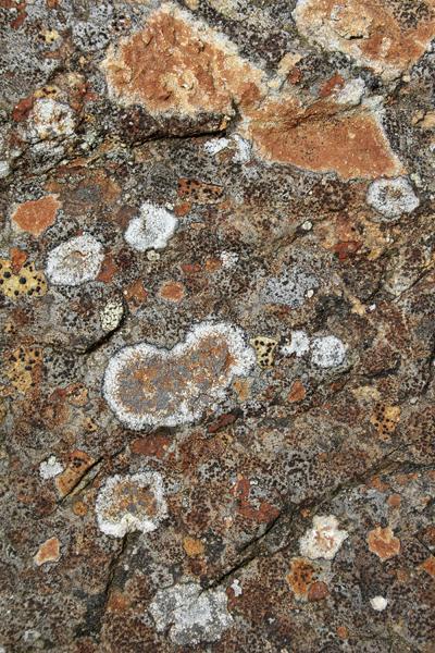 MNA Cynwyd Lichen1
