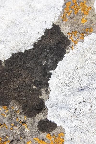 MNA Great Orme Lichen1