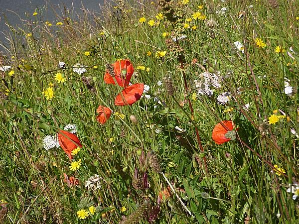 27 Velvet meadow