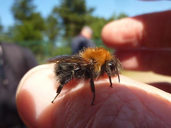 28 Freshfield tree bee