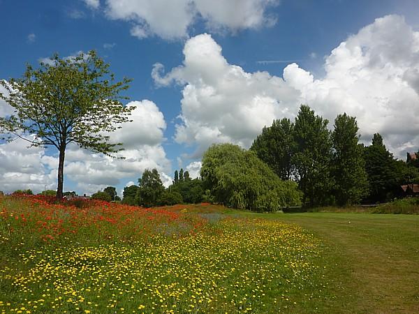29 Kirkby flower hill