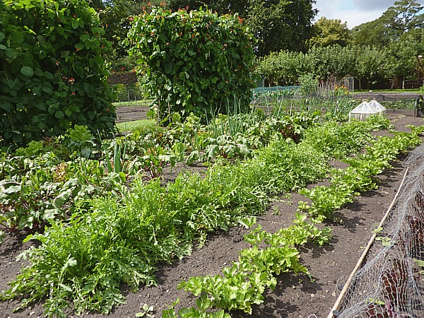32 Speke kitchen garden rows