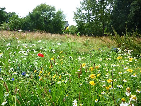 33 Reynolds wildflowers