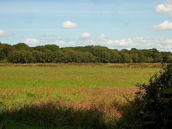 35 Woodvale field of Redshank