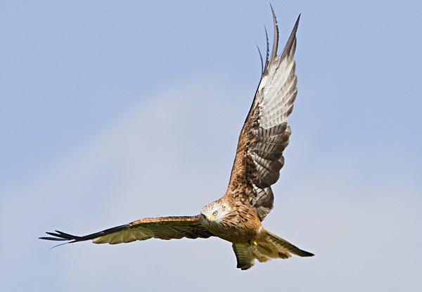 01 Kites