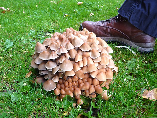 36 Taylor erupting fungi