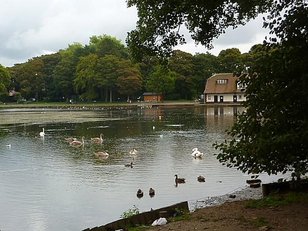 36 Taylor swan view