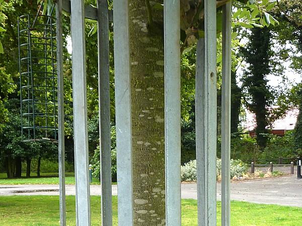 36 Taylor tree 1 bark