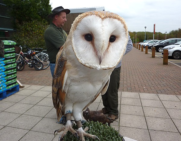 38 Town Lane Barn Owl