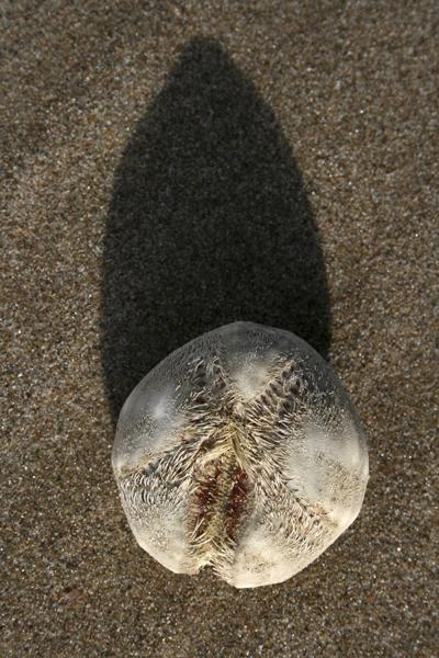MNA New Brighton Heart Urchin1
