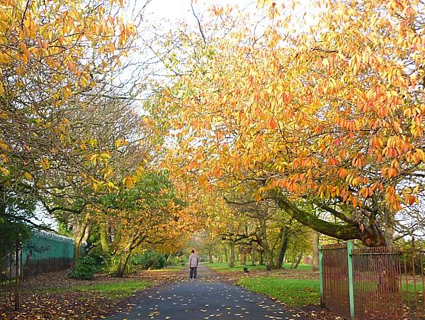 44 Stanley Autumn gate