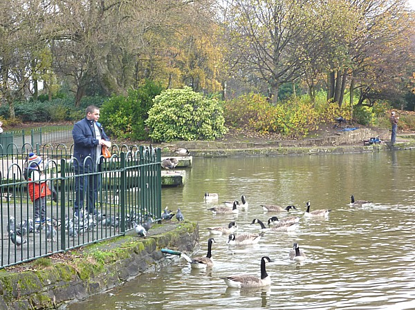 44 Stanley feeding geese