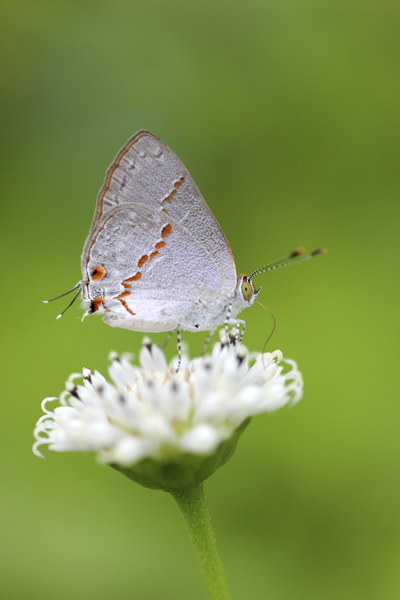 MNA Belize Butterfly1