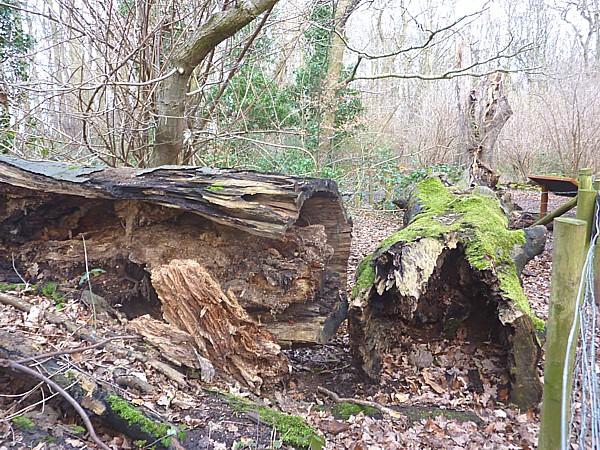 02 Eastham decaying wood