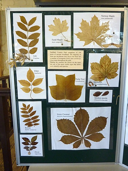 02 Eastham leaf display