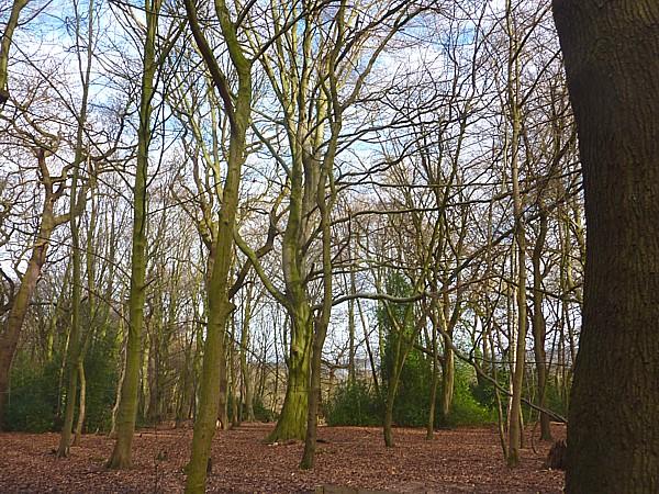 02 Eastham winter woods