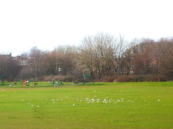 10 TPT Gulls on rec