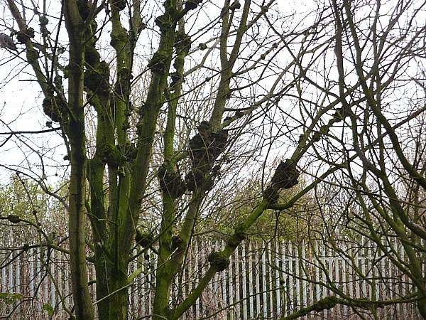 10 TPT lumpy tree