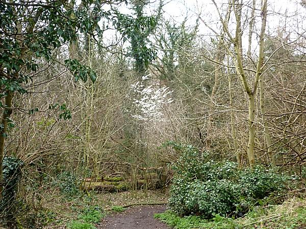 11 Dibbinsdale woodland path