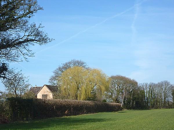 12 Thornton Hough Willow