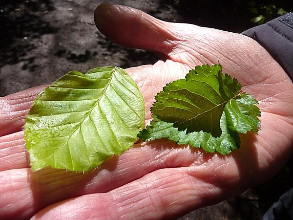 18 Storeton leaves