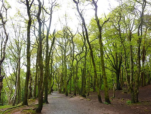 18 Storeton woodland path