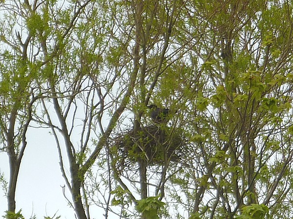 20 Leasowe crows nest